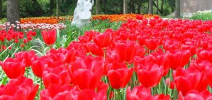 中山植物园