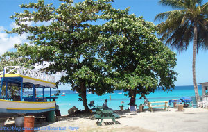 【加勒比海图片】加勒比海并不遥远:【巴巴多斯】和法国海外省【马提尼克岛】
