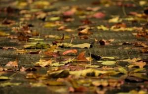 【塔川图片】抵不住的秋天的诱惑------一个人的塔川,宏村及黄山!