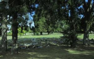 【罗托鲁瓦图片】新西兰罗托鲁瓦红树林风景区卡片机实拍