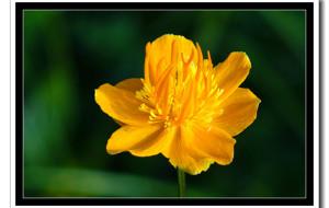 【门头沟图片】这些年遇到的那些野花(128种野花,200多张照片)