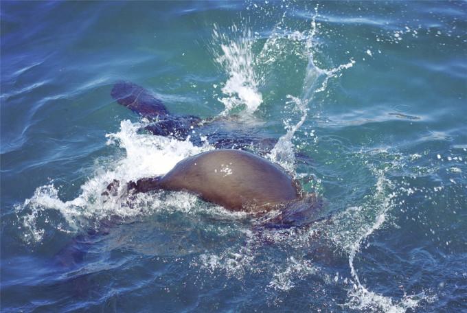 壁纸 动物 海洋动物 桌面 680_456