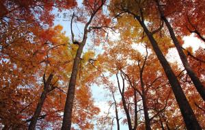 【南江图片】【自驾记】去光雾山看看秋天的颜色咯