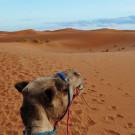 摩洛哥攻略图片