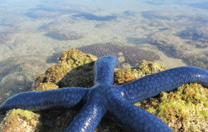【大堡礁图片】澳大利亚墨尔本、大洋路、黄金海岸、布里斯班、费沙岛、大堡礁16天自驾游