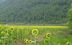 【涪陵图片】中国的普罗旺斯——大木花谷(涪陵)