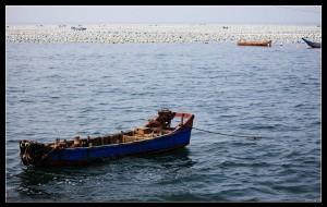 【枸杞岛图片】冥冥之中遇到你,百转千折只为心中的那片蓝色的海