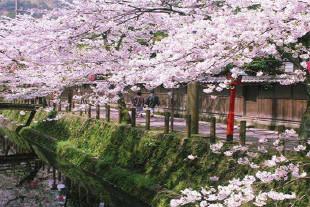 丰冈市图片