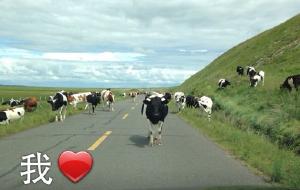 【白山图片】#消夏计划#一个人的大草原之旅-2015年6月