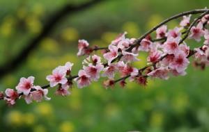 【乐昌图片】#花样游记大赛#春天去九峰踏青吧