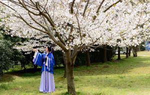 【方山图片】苏州樱花记,上方山森林公园