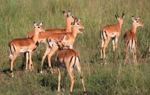 【内罗毕图片】在东非草原上浪一浪