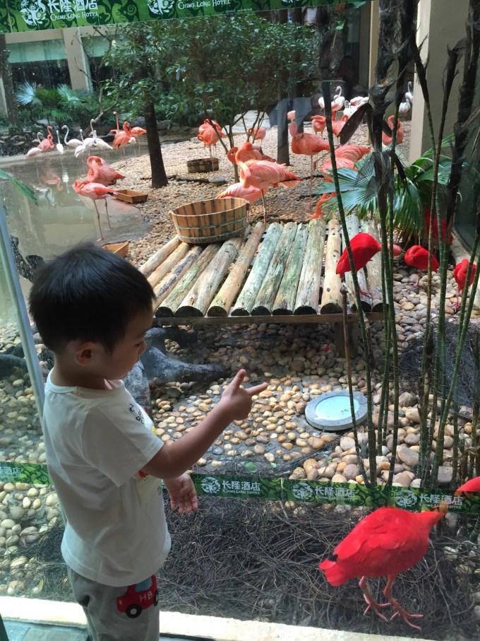 【带着睿哥去长隆】广州长隆野生动物园,珠海横琴海洋