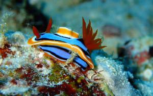 【马布岛图片】开启新世界的大门-仙本那OW+AOW潜水之旅