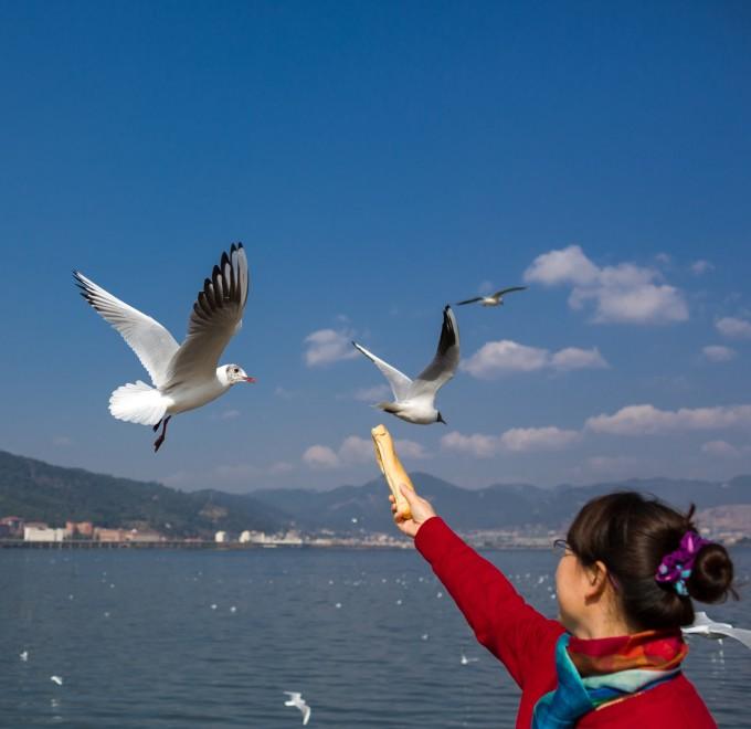 壁纸 动物 鸟 鸟类 680_660