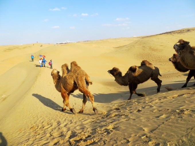 5号,8:00出发穿越沙漠,下午到达响沙湾,晚上入住达拉特旗宾馆,吃