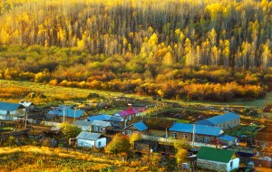 【室韦图片】追逐着呼伦贝尔之秋【迷恋那片金色森林】