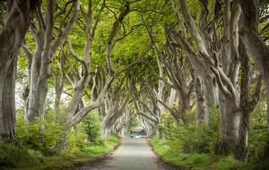 英国娱乐-黑暗树篱
