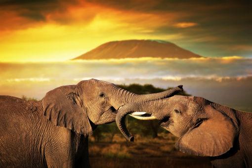 【非洲大草原】2017魅力肯尼亚 野生动物大迁徒 马赛马拉动物世界 乞