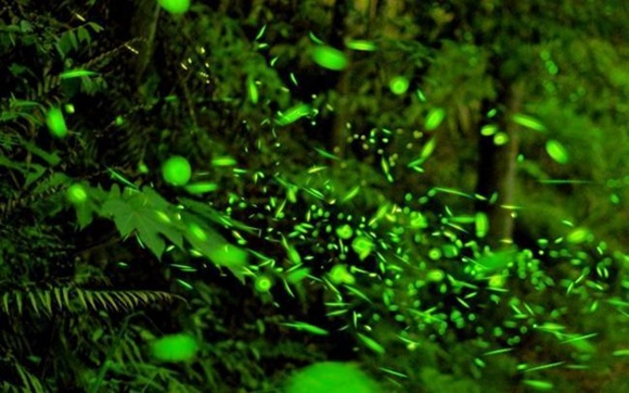 新加坡民丹岛红树林+萤火虫+奎笼海鲜餐