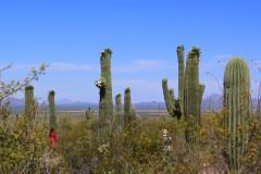 那年,我们跟着龙颖,环游美加(十四)奇瓦瓦沙漠和仙人掌国家公园