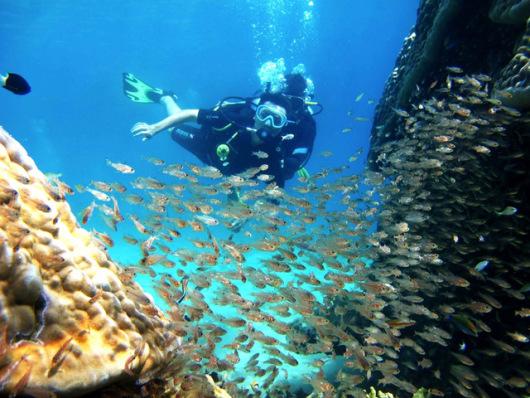 无论主题是哪种奇妙的海底生物,都会不经意地流露几个斑斓壮阔的全景