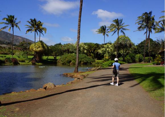 美国夏威夷茂宜岛包车一日游(热带植物园 伊奥山谷 可