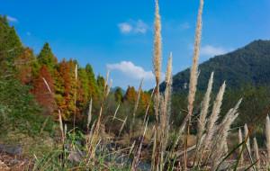 【临海图片】【谁染一山秋浓 • 浮翠半遮流彤】临海红树林寻记
