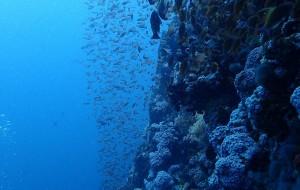【海豚湾图片】在见不到海豚的海豚湾——鱼你相遇,菲你莫属