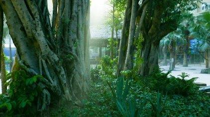 壁纸 风景 森林 桌面 422_236