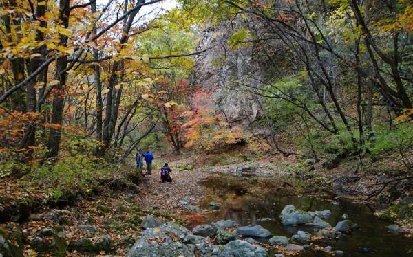 它与关门山水库风景区  相连,但其景色与之不同,这里古树名木  众多