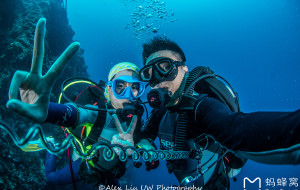 """【宿雾图片】♥""""鲸""""夜星辰 乌""""鱼""""密布♥菲律宾 杜马盖地-墨宝-道因♥潜水八天游♫♪♫♪"""