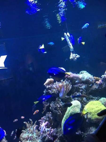 壁纸 海底 海底世界 海洋馆 水族馆 450_600 竖版 竖屏 手机
