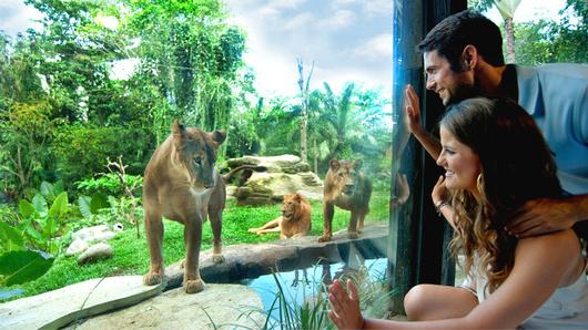 亲子野生动物园产品 巴厘岛野生动物园门票 (亲亲爱我