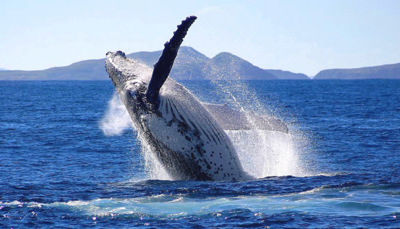 【趣味体验】悉尼 斯蒂芬港滑沙+1.5小时观海豚巡游