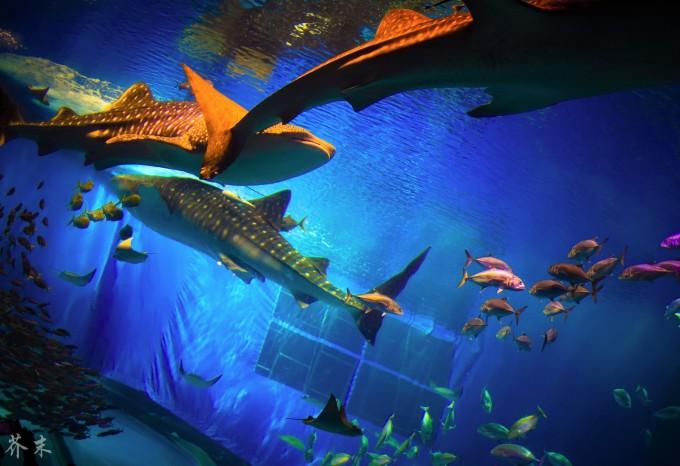 壁纸 海底 海底世界 海洋馆 水族馆 680_466