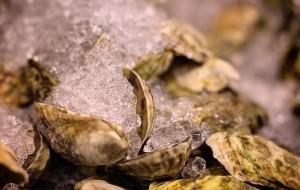 波士顿美食-Island Creek Oyster Bar