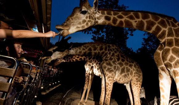 【泰国风情】泰国自由行清迈夜间动物园观光门票 和小