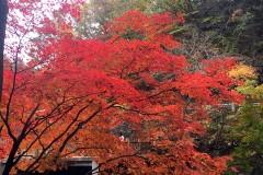 一叶而知秋——本溪关门山森林公园赏枫