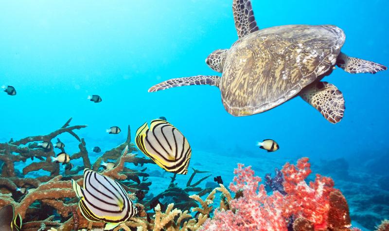 100种海洋动物名称大全