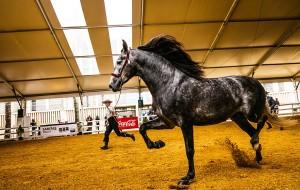 【塞维利亚图片】马展节、庭院节、花展节之西班牙春季18日八字环线自驾游