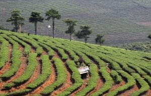 【普洱图片】七彩云南行----第十三景区:景洪-普洱    茶博园
