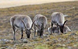 【北极图片】10天环游北极