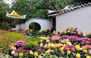 【福州图片】福州西湖菊花展        万人空巷来观赏